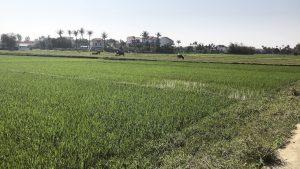 Vietnam Reiseblog Hoi An